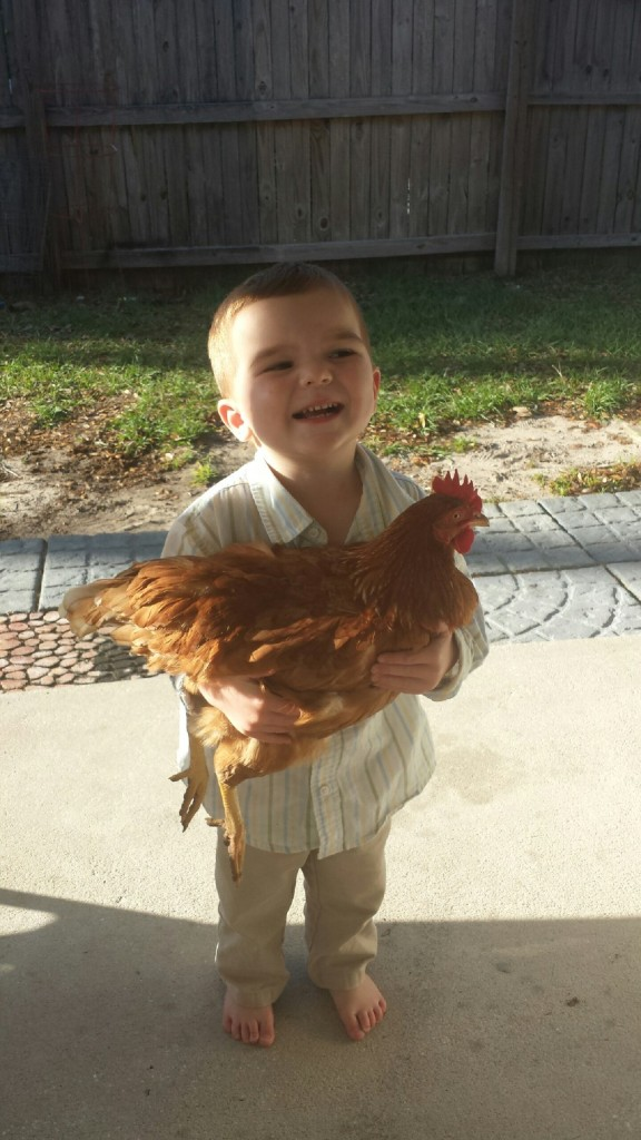 young boy holding a chicken