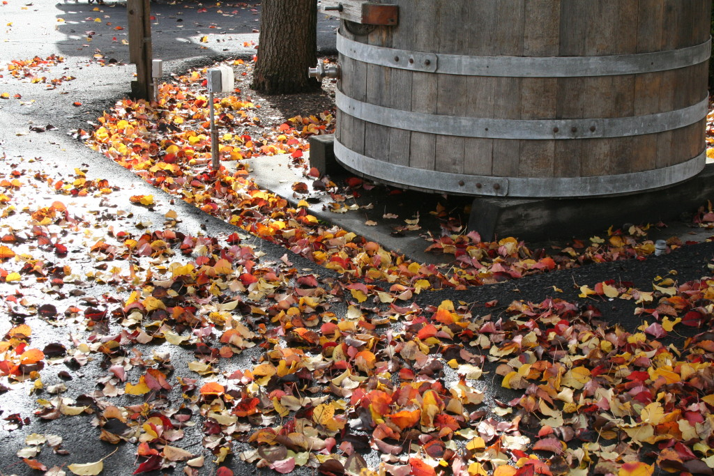Napa-valley-fall-leaves