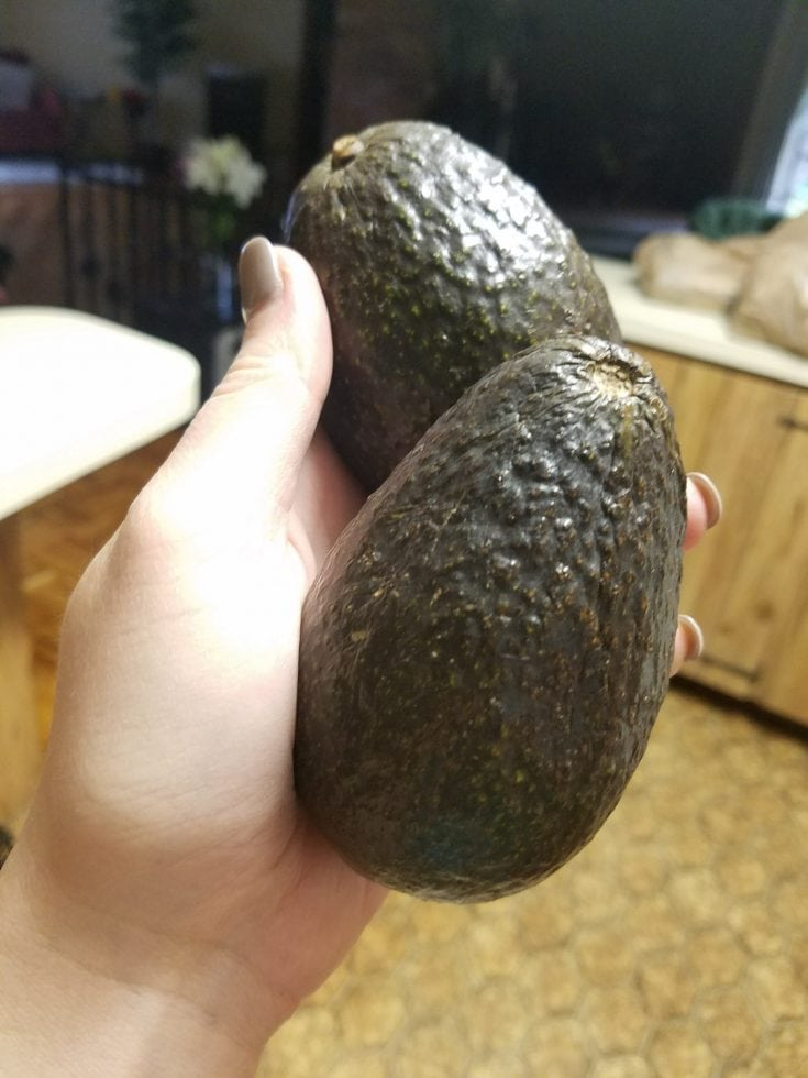 a pair of ripe hass avocados