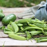 local fresh green beans and cucumbers
